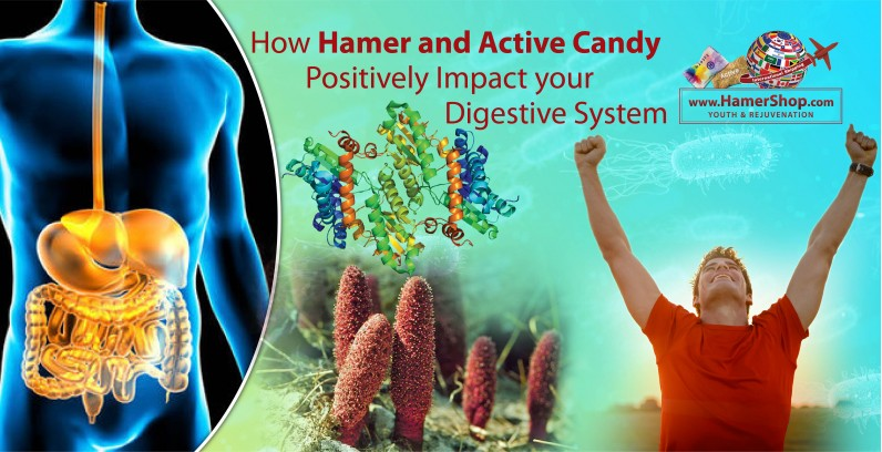 How Hamer and Active Candy Positively Impact your Digestive System?