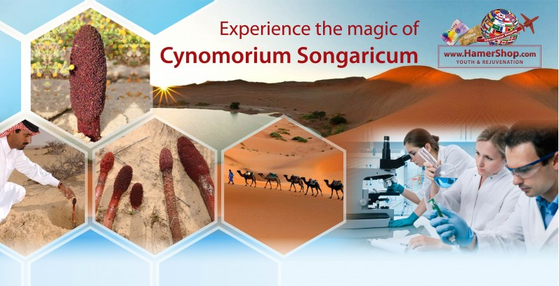 How Cynomorium Songaricum Gives You it's Wonderful Magical Benefits