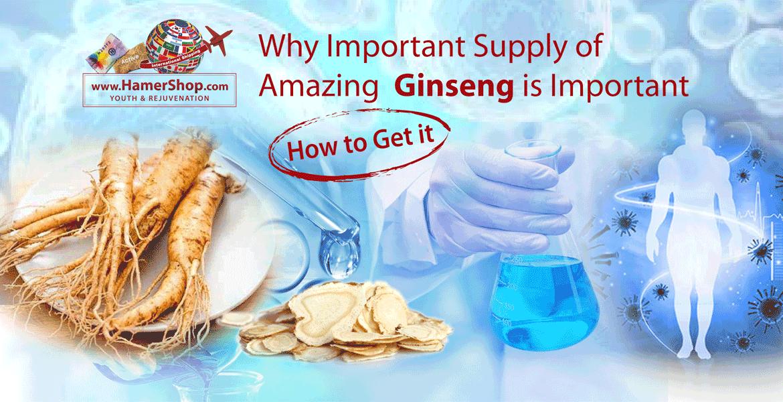 https://hamershop.com/image/cache/catalog/Blog/Supply%20of%20Ginseng/pshoppng/Supply-of-Ginseng-P-1170x600.png