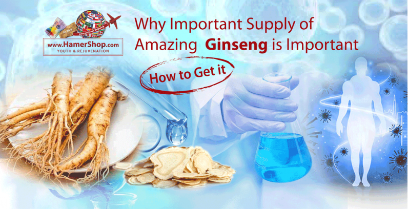 Amazing Ginseng: Why a Daily Supply is Important? [How to Get it]